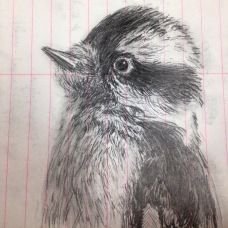 bird_drawing
